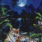 BAB0305 Tiger Moon